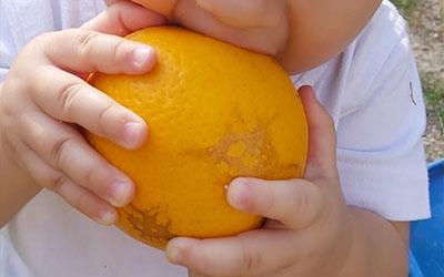 Protegido: Pequeños y naranjas en el patio
