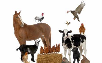 Protegido: Animales de la Granja en clase de Yoli